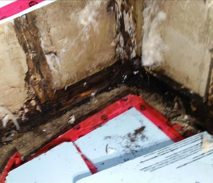 Mold Remediation Fredericton Residents:  Follow These Mold Safety Tips If You Suspect Mold